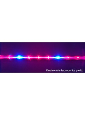 T8 LED Red & Blue Grow Tube-4ft