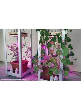 Watercircle Grow Kit with rack & LED(Fruit Vegetable)