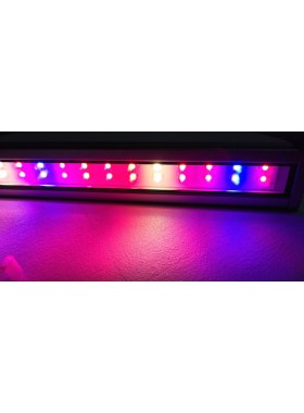 WP1 LED grow light