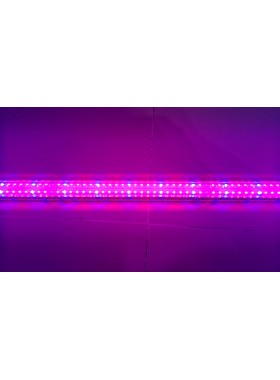 T8 LED Red:Blue Grow Tube-4ft