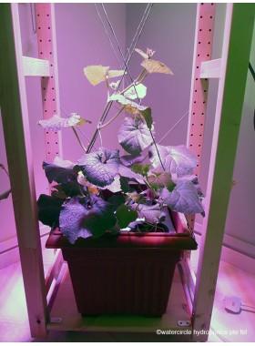 Watercircle Grow Kit (Fruit Vegetable)